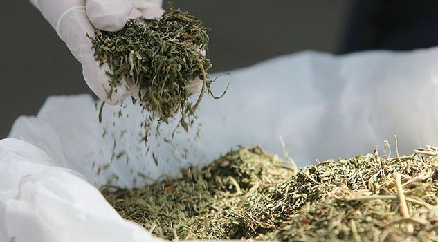1.30 dólares por gramo será el costo de la mariguana en Uruguay