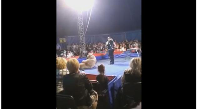 Oso ataca al público y hiere a varios en un circo