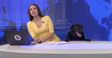 Perrito labrador robó cámara en noticiero