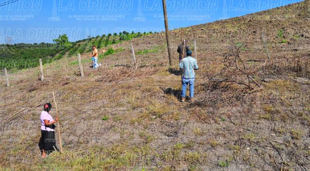 Resienten agricultores estragos por la sequía