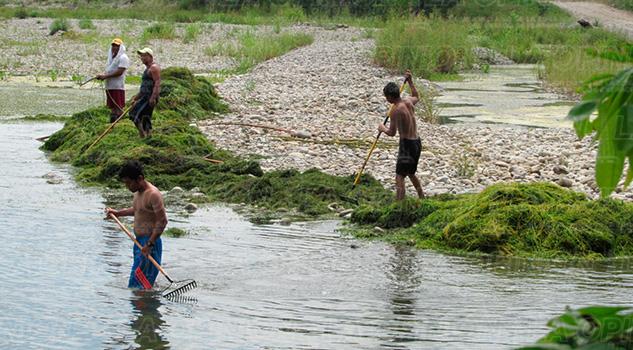 Álamo Titánica Limpia Pantepec Río