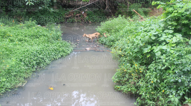 Arroyo contaminado con aguas negras