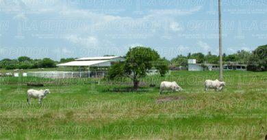 Atrasan apoyos para ganaderos