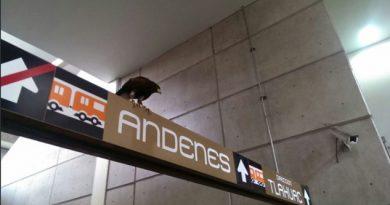 Ciudad de México Metro Estación Nopalera