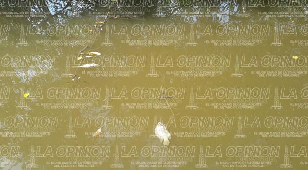 Ecocidio en arroyo Oro Verde