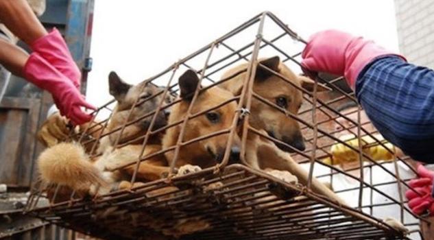 Festival de lichi y carne de perro en China