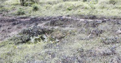 Fuga de crudo directo al río Tecolutla