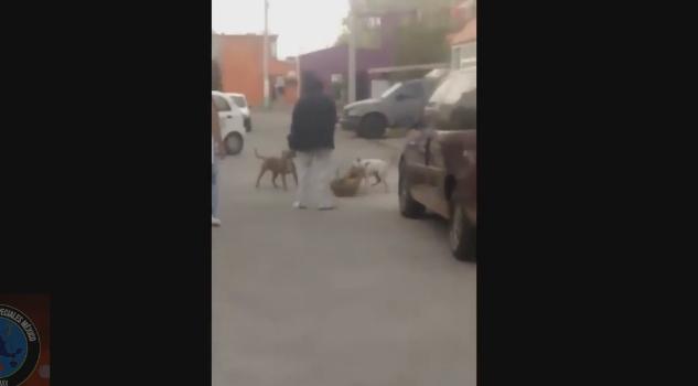 #LordMataPerros usa a sus pitbull para atacar en Ecatepec
