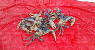 Matan al cangrejo azul en Cazones