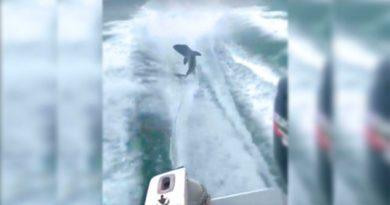 Atan un tiburón a una barca y lo torturan arrastrándolo a toda velocidad