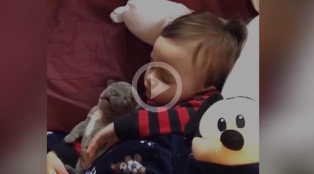 Bebé Cachorro Dormidos