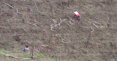 Destruyen bosques