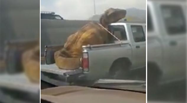 Dinosaurio Maltratado