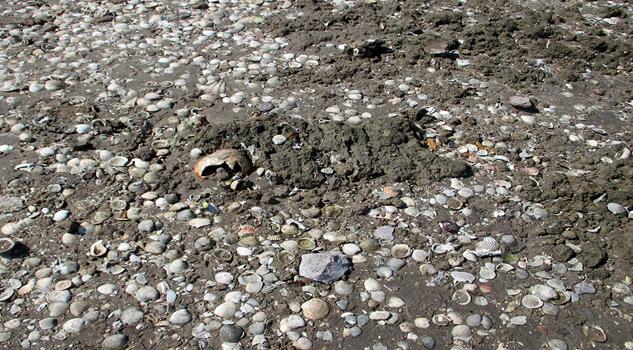 La playa El Conchalito