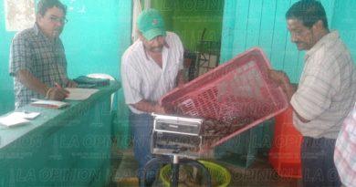 Regresa pesca de camarón