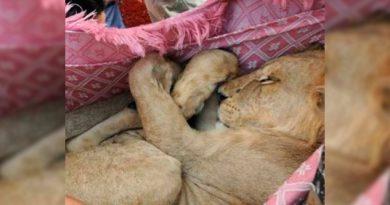 Rescatan Cachorro León CDMX