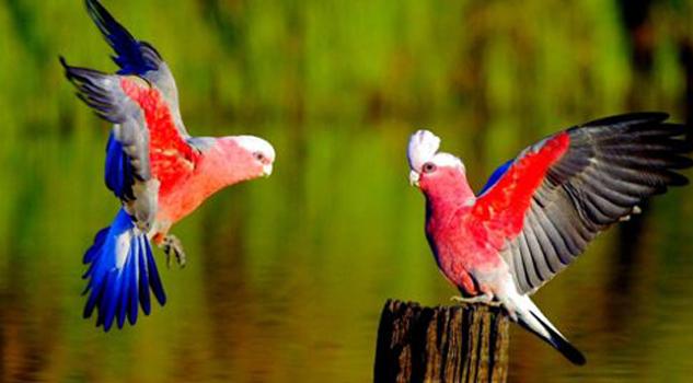 las-10-aves-mas-bellas-del-mundo
