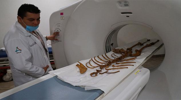 naiaesqueletoconservacion