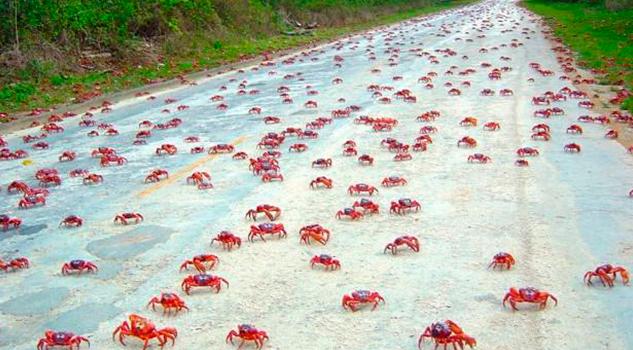 cangrejos