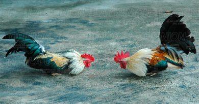 Contabilizan 4 mil firmas contra reformas a ley animal