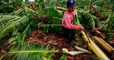 Pérdidas Cultivos Zona Norte