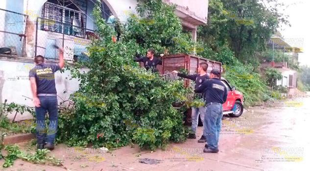 Cadetes Policía Municipal Árboles Caídos Huracán Katia