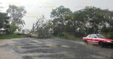 Cae árbol sobre carreterA