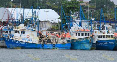 Capturas de atún dan vida al puerto