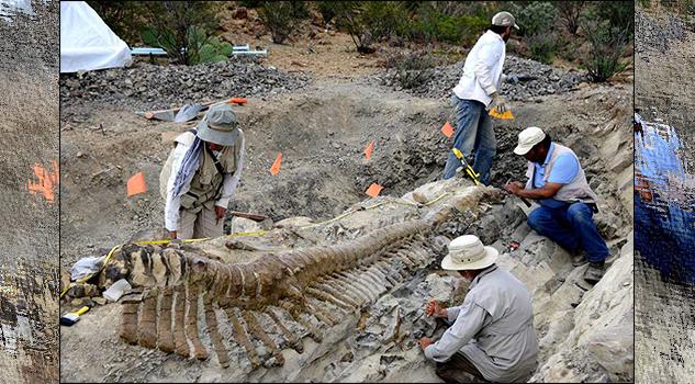 Necesario formar expertos en la conservación del patrimonio fósil en México, consideran especialistas
