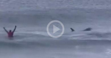 Orcas Campeonato Surf