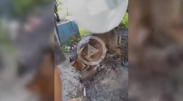 Perrita Salva Cachorro Morir Ahogado