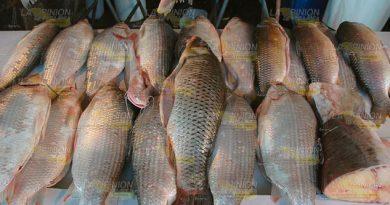 Supervisan pescaderías