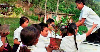 Donan Más Plantas Escuelas