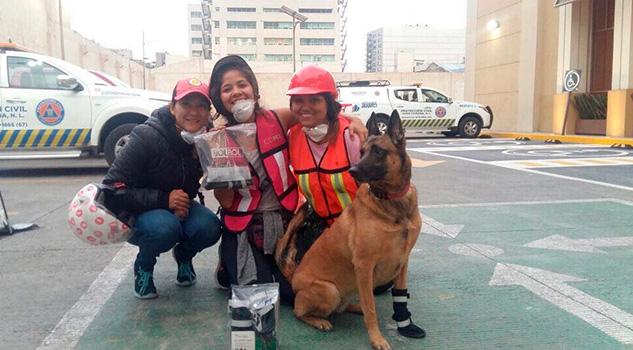 Robaron a una perrita rescatista que ayudó tras el terremoto de México