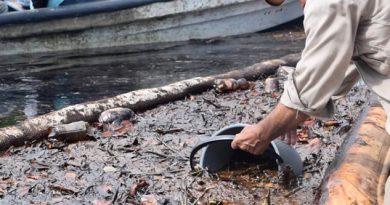 Derrame Hidrocarburo Río Tonalá Muerte Especies