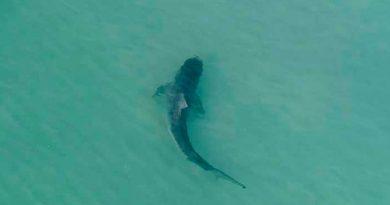 Estadunidense Muere Ataque Tiburón Buceaba