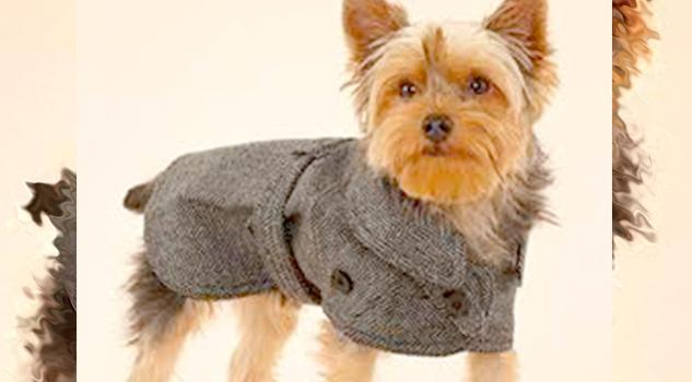 FOTOGALERIA: Tus mascotas tienen frío, protégelas así
