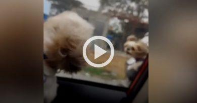 Caninos Rápidos Furiosos