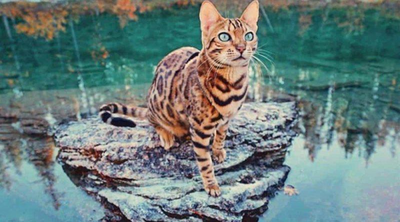 Esta es Suki, una gata viajera que lleva una vida mejor que la tuya