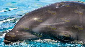 Delfines Atraen Turismo