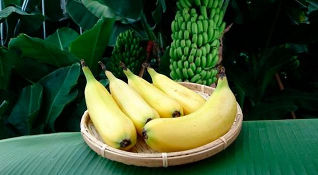 Plátano Cáscara