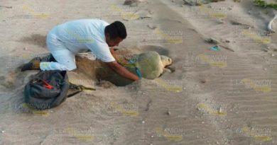 Removerán Titular Campamento Tortuguero