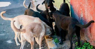 Falta Dinero Venezolanos Abandonan Mascotas