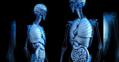 Intersticio Órgano Humano Ciencia Acaba Descubrir