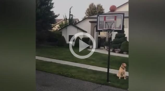 Perro Odiará Básquetbol