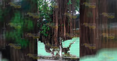 Árbol Colapsar Barda