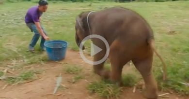 Así Ríen Elefantes