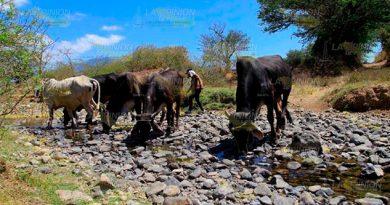 Sequía Cierne Amenazante