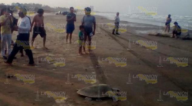 Sorprenden Tortugas Turistas