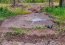 Se agrava el problema de contaminación, aparecen animales muertos entre el chapopote